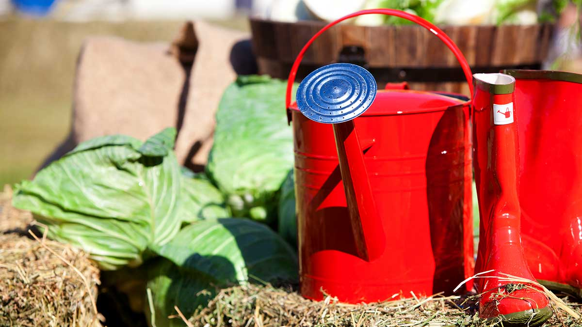Community Kitchen Garden - watering cans on hay bale